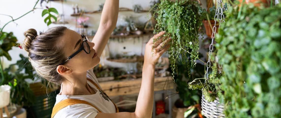 plantas-de-interior