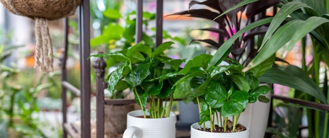 plantas-que-crecen-rápido