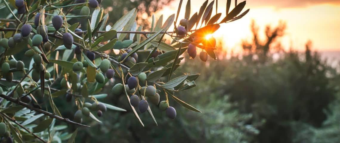 plantas-del-mediterráneo
