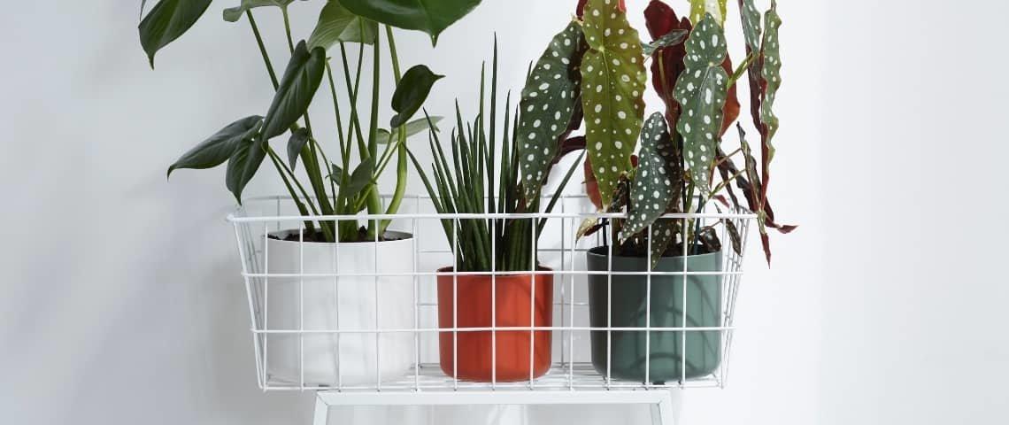 plantas-con-maceteros