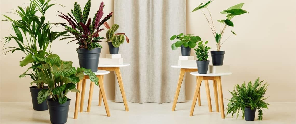 packs-plantas
