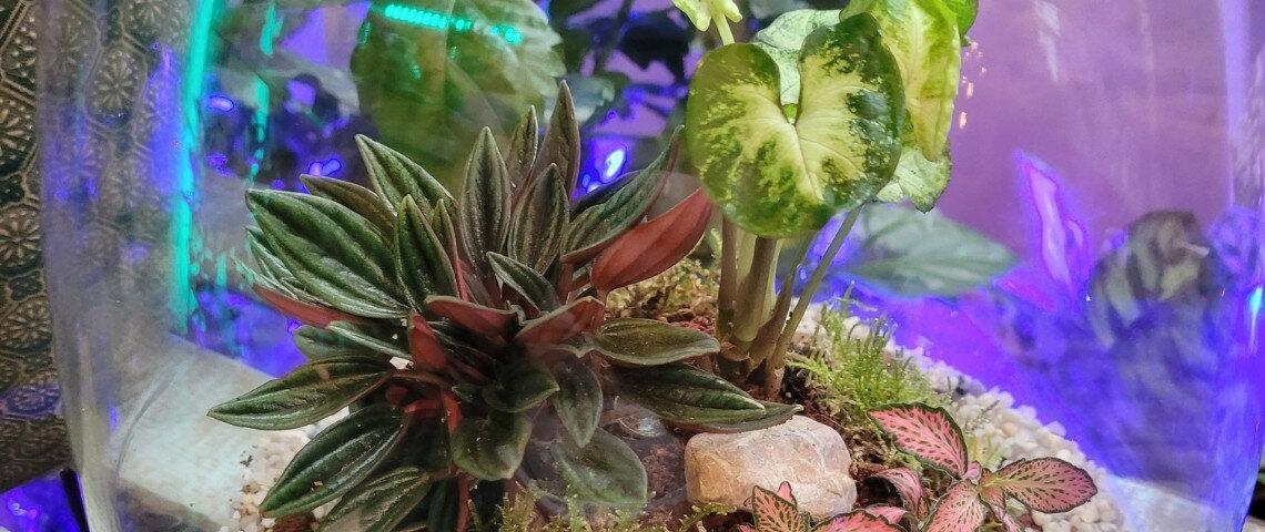 terrarios-con-plantas