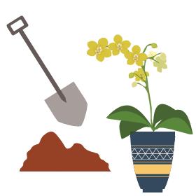 abonar y trasplantar orquídea