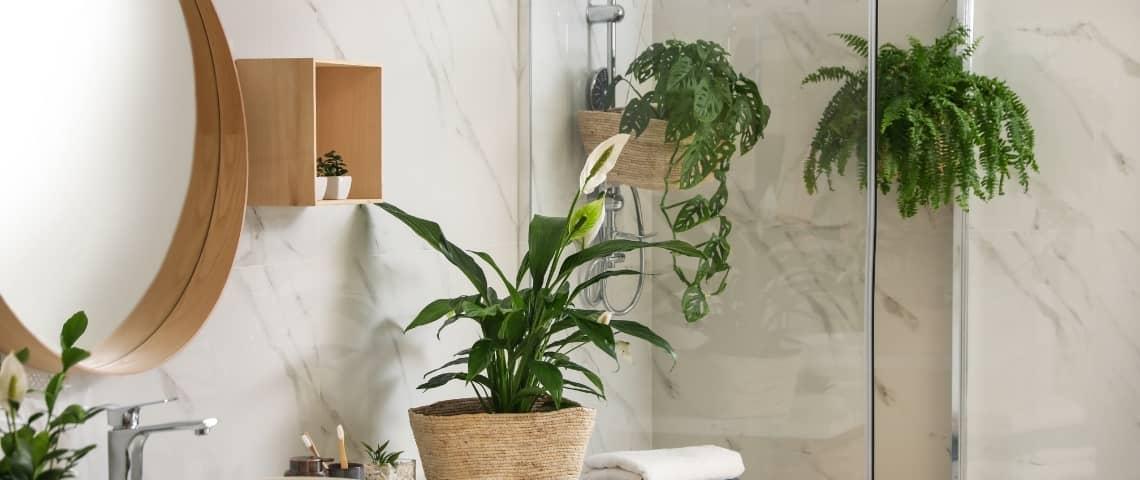estilos diferentes y decoración con plantas