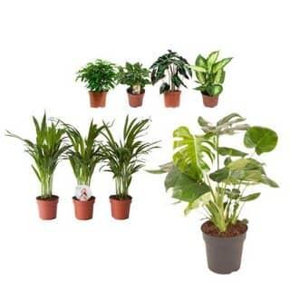 plantas verdes purificadoras