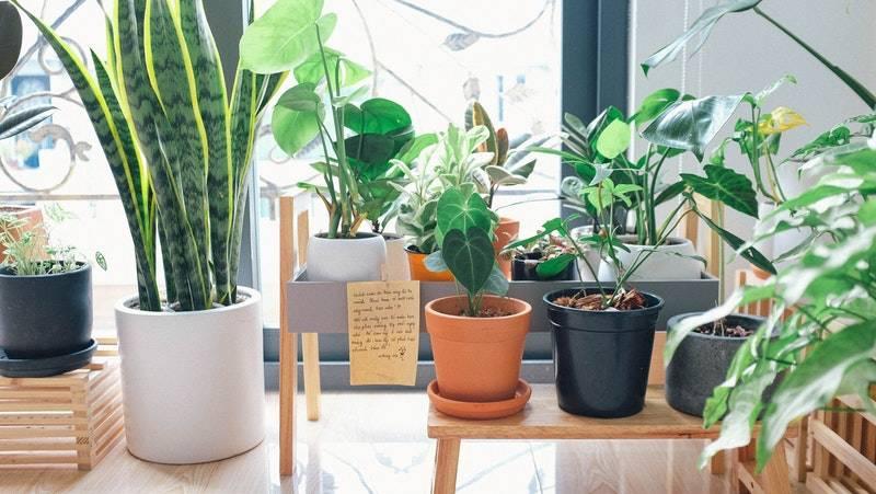 plantas de interior purificadoras del aire