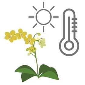lugar y temperatura ideal orquídea