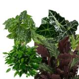 4 plantas verdes interior