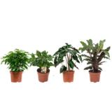 mezcla de plantas verdes