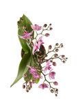 ramas orquídea rosa