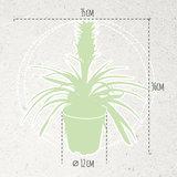 dimensiones planta piña