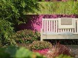 verónica color rosa en jardín