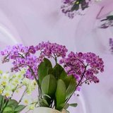 orquídea bellissimo morada 50cm