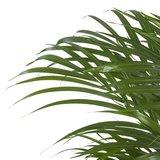 hojas palmera areca 90cm