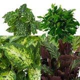 hojas set 4 plantas urban jungle medium