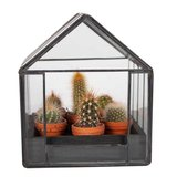 6 mini cactus diferentes en mini invernadero