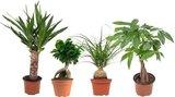 set urban jungle de 4 plantas de interior