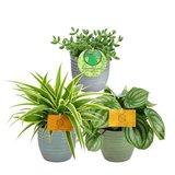 trio de plantas de interior