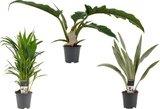 pack plantas aire limpio