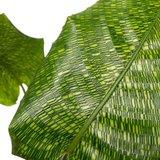 hojas calathea mosaico