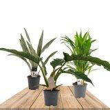 trio plantas aire limpio