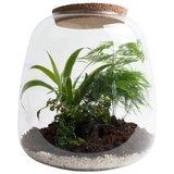 terrario para plantas de vidrio