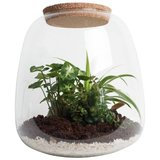 terrario de vidrio con plantas