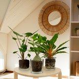 decoración con plantas tropicales