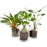 set plantas urban jungle