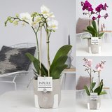 orquideas deco