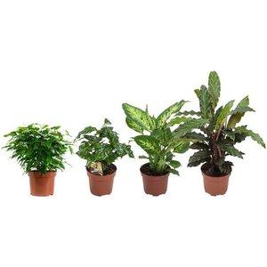 set 4 plantas urban jungle medium