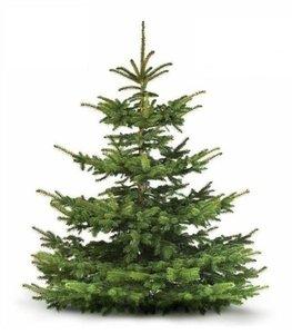 árbol de navidad natural abeto normandía 140cm