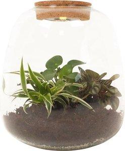terrario plantas de vidrio