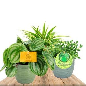 trio de plantas de interior con maceteros