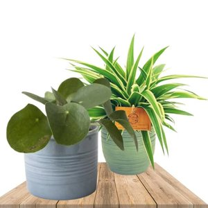 set plantas interior con maceteros