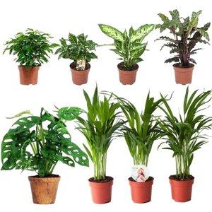 set 8 plantas urban jungle