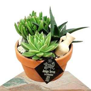 plantas suculentas macetero terracota