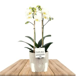 orquidea blanca en macetero